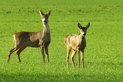 hiking in estonia, roe deer safari tours